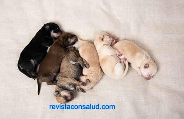 Qué Significa Soñar Con Perritos Recién Nacidos
